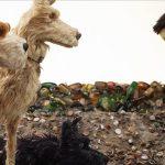 Filmrecension: Isle of Dogs – Wes Andersons nya mästerverk